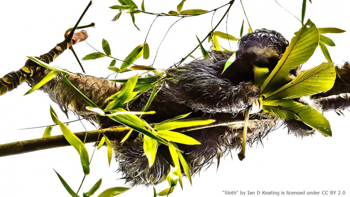 Monteverde Costa Rica - Sloth